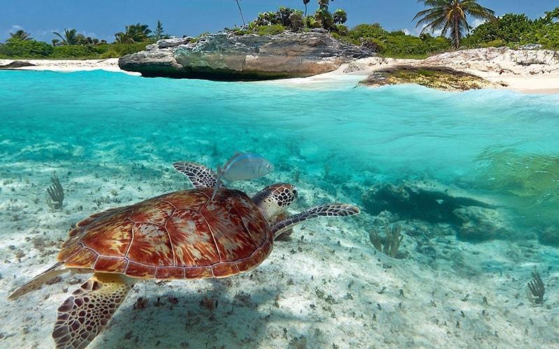 Круиз по Карибскому морю