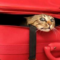 В «Жулянах» нашли новую хозяйку для кошки за пару часов или как правильно возить домашних любимцев самолётом