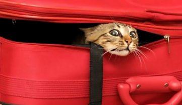 У «Жулянах» знайшли нову господиню для кішки за пару годин або як правильно возити домашніх улюбленців літаком