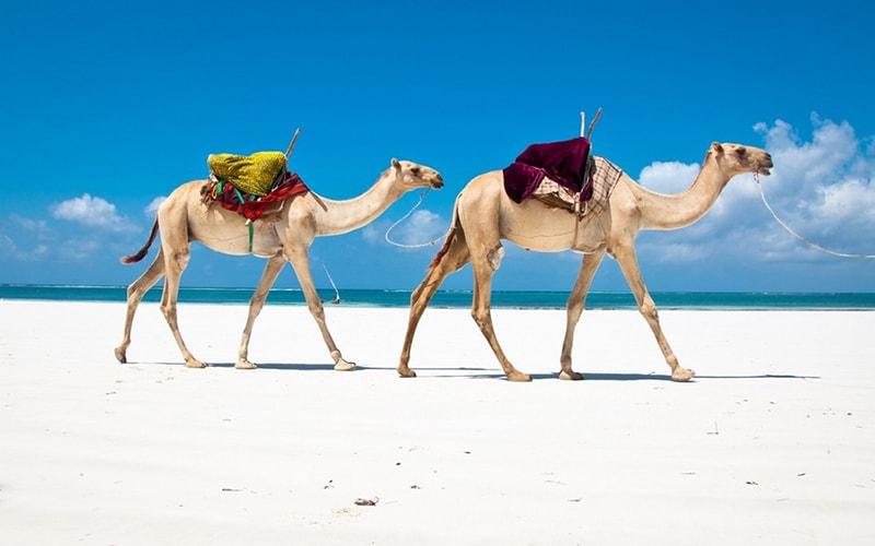 Зимой в Египет