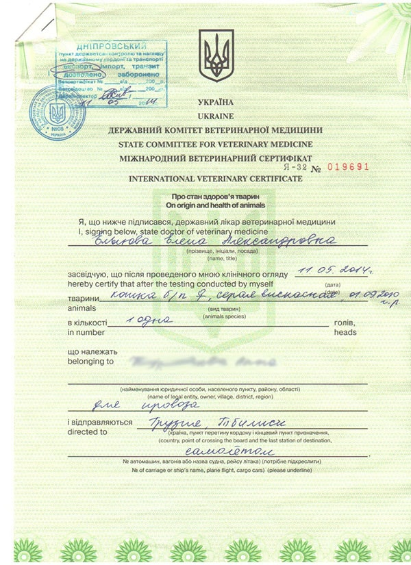 международный ветеринарный сертификат