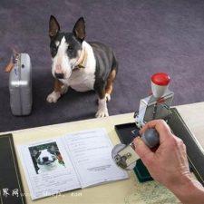 правила перевозки животных в самолете, поезде и другом транспорте