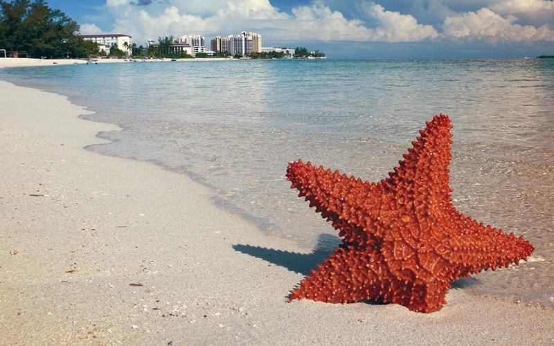 Как провести отпуск одной на Багамах