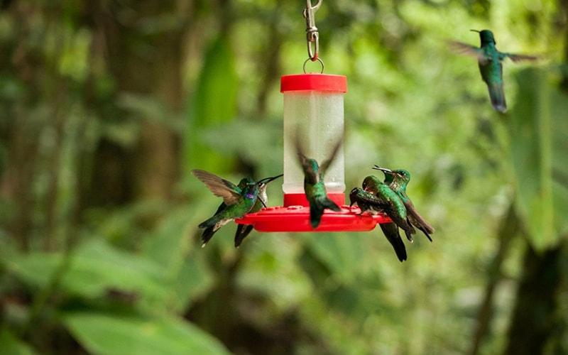 Коста-Рики