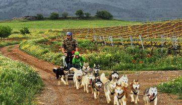 Испания приглашает покататься на собачьих упряжках!