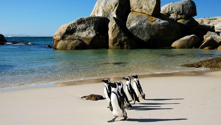 Boulders Beach, Саймонстаун/Кейптаун, ЮАР