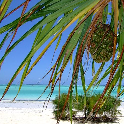 9 лучших пляжей Африки