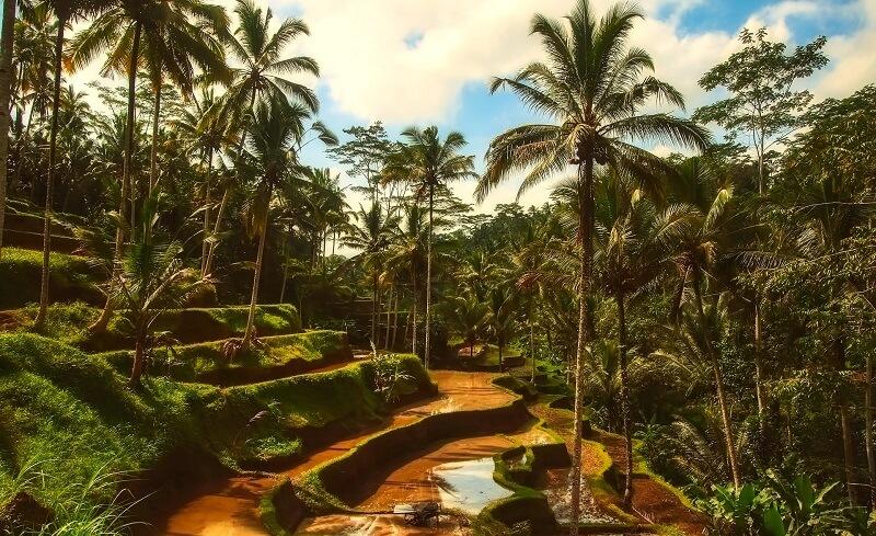 Путевка на остров Бали