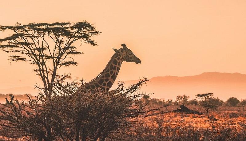 Путевка в Кению