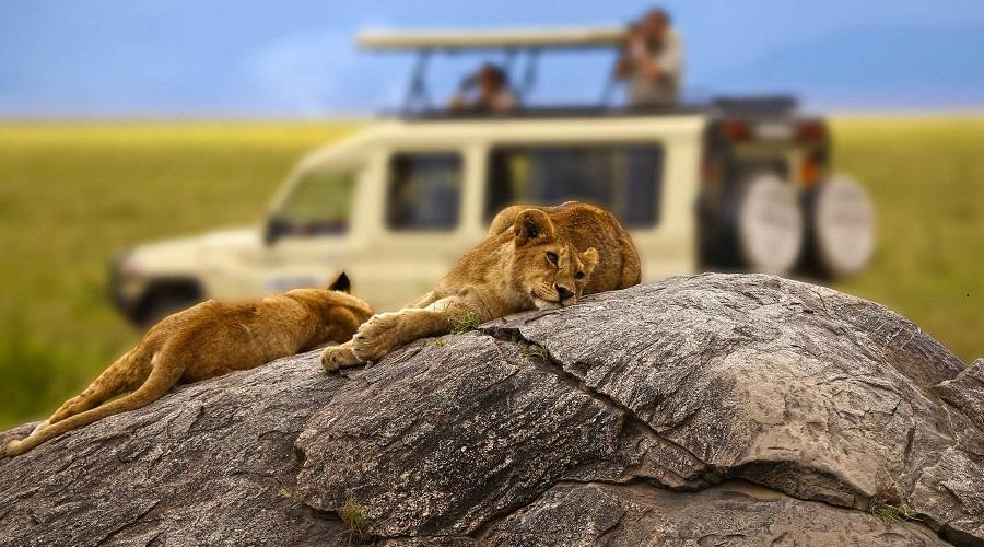 Сафари на острове Занзибар