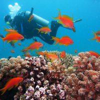 Дайвинг в Египте: ТОП 7 лучших бухт для дайвинга