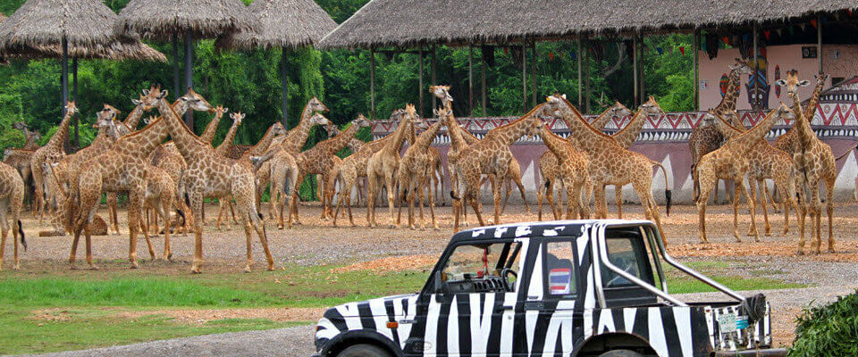park-safari-world-a-bangkoke