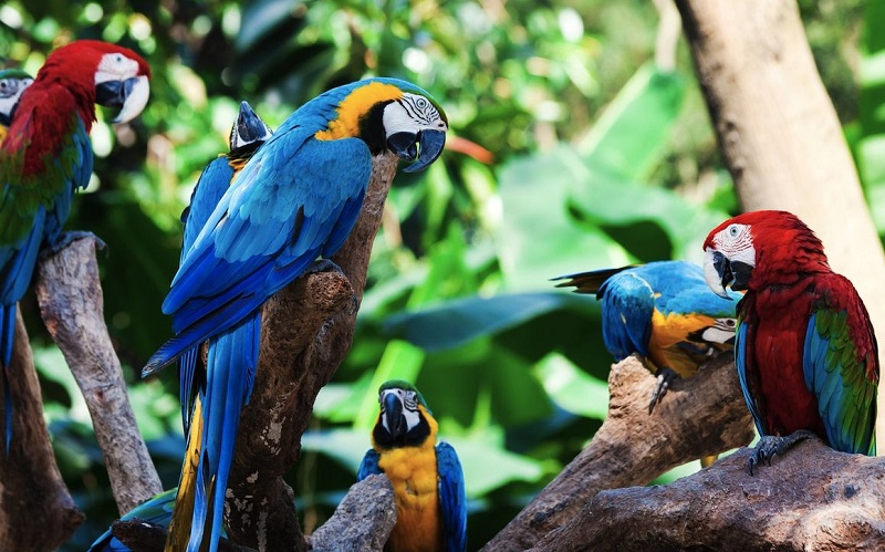 Парк попугаев Канарские острова